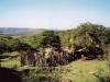Rustic Africa